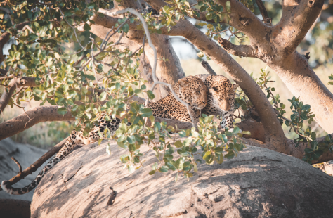 Serengeti3.png